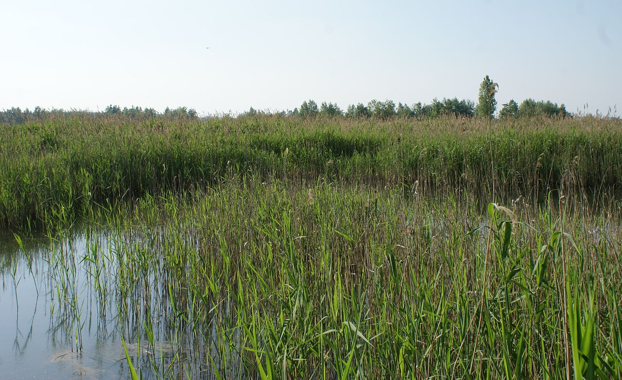 File Grass In Water 2 Jpg Wikimedia Commons