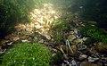 Gravier silex flint nodules fonds de la rivière Les baillons à Enquin 02.jpg