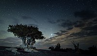 Great Basin National Park by night.jpg