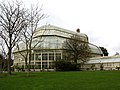 Great Palm House, Botanic Gardens, Glasnevin, Dublin, Ireland - geograph.org.uk - 334019.jpg