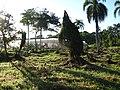 Greenhouse, looking east, June 2010 - panoramio.jpg