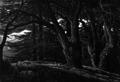 Grove of Cedars, Lebanon.png