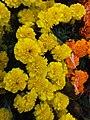 HK CWB 銅鑼灣 Causeway Bay 維多利亞公園 Victoria Park CNY 年宵花市 Lunar New Year Fair Market flower stall colorfull goods January 2020 SSG 19.jpg