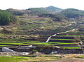 Haeinsa Rice Terraces, South Korea.jpg