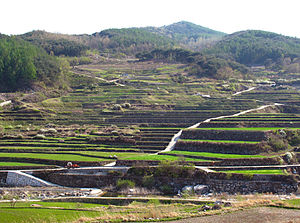 Haeinsa - Rice terraces in farmland surrounding Haeinsa