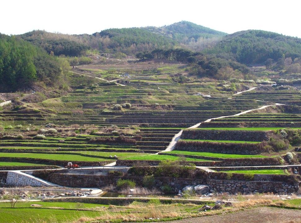Haeinsa Rice Terraces, South Korea