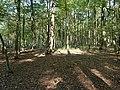 Hambach forest 69.jpg
