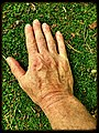 Hand on moss - Flickr - Stiller Beobachter.jpg