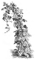 Haricot de Soissons à rames Vilmorin-Andrieux 1883.png