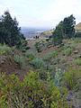Hauts plateaux d'Ethiopie-Région Amhara (23).jpg