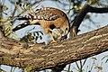 Hawk (47969508816).jpg