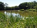 Heyshoot Pond - geograph.org.uk - 204464.jpg