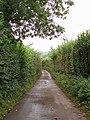 High hedges - geograph.org.uk - 222678.jpg
