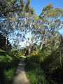 Hiking in the Adelaide hill country (1653882794).jpg