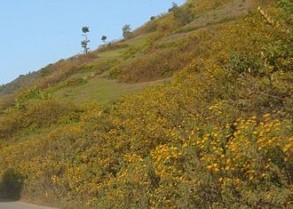 Flowers carpeting the foothills Hill Slope.JPG