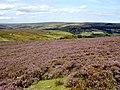 Hillside Above Thorgill Bank - geograph.org.uk - 537021.jpg