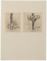 Homo sapiens - Madagascar - 1700-1880 - Print - Iconographia Zoologica - Special Collections University of Amsterdam - UBA01 IZ19400089.tif