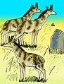 Honanotherium schlosseri 02.jpg