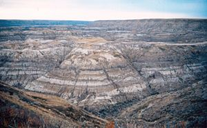 Horseshoe Canyon Formation - Horseshoe Canyon Formation at Horsethief Canyon, near Drumheller. The dark bands are coal seams.