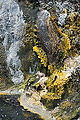 Hot spring on bank of Waimangu Stream - portrait.jpg