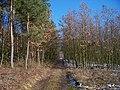 Housina, hřebenová cesta (03).jpg