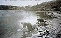 Huelgoat Laveuses sur le lac.jpg
