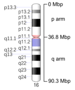 Map of Chromosome 16