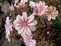 Iceland Plants 4828