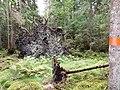 Igelsjöskogen 2017f.jpg