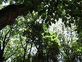 Ikuta Shrine - panoramio (5).jpg
