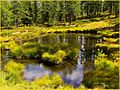 Il lago giallo - panoramio.jpg