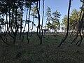 Imazu Pine Grove 14.jpg