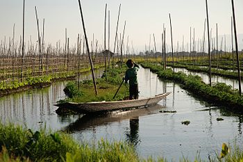 Inle Lake Burma floating gardens 4