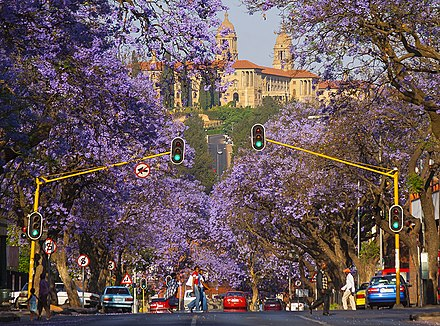 A street lined with jacarandas in Pretoria, with the Union Buildings atop Meintjieskop in the background Jacaranda Trees Pretoria.jpg