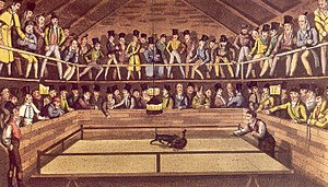 Monkey-baiting - The Westminster-Pit: A Turn-up between a Dog and Jacco Macacco, the Fighting Monkey by Henry Thomas Alken Illustration, 1822
