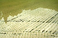 Japanese rice field 02.jpg