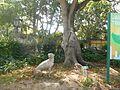 Jardim Botânico (26913866340).jpg