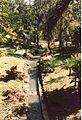 Jardin de Pamplemousses (3001822229).jpg
