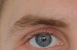 Eyebrow Facial feature