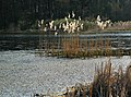 Jezioro Śniatowo - panoramio.jpg