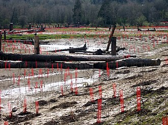 Restoration ecology - Rehabilitation of a portion of Johnson Creek, to restore bioswale and flood control functions of the land which had long been converted to pasture for cow grazing. The horizontal logs can float, but are anchored by the posts. Just-planted trees will eventually stabilize the soil. The fallen trees with roots jutting into the stream are intended to enhance wildlife habitat. The meandering of the stream is enhanced here by a factor of about three times, perhaps to its original course.