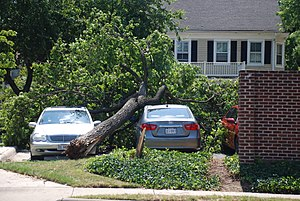 June 2012 North American derecho - Downed tree in Oakton, Virginia