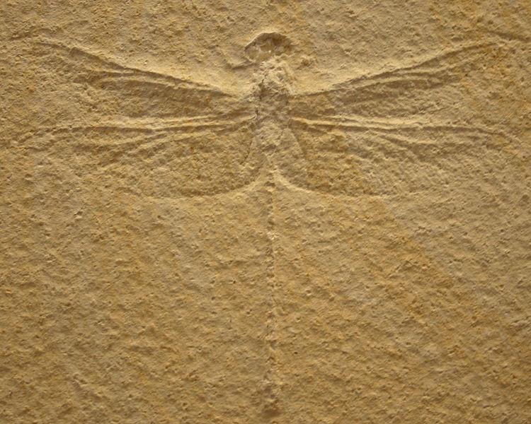 Fossil av trollslända