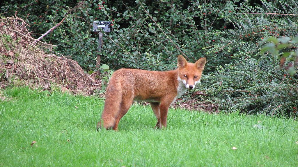 جولة في مدينة الضباب ( لندن ) 1024px-Kew_Gardens_-_London_-_September_2008_(2958753889).jpg