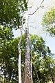 Khao Phra Wihan National Park - Don Tuan Khmer Ruins (MGK20846).jpg