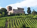 Kintzheim-Château-Vignoble (2).jpg