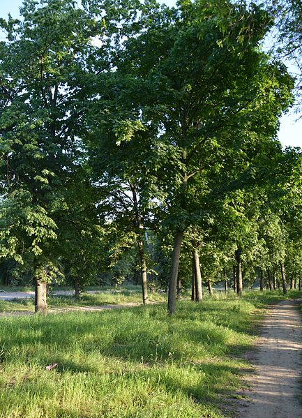 File:Kirovograd Park Peremogy 01 (YDS 4829).JPG