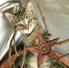 Kitten's friend barnstar.png
