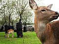 Klaipedos ZooSodas 052.jpg