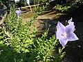 Komatsucho, Higashiyama Ward, Kyoto, Kyoto Prefecture 605-0811, Japan - panoramio.jpg